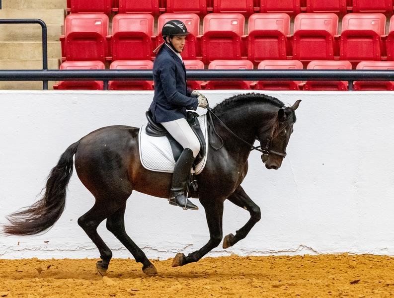 At stud, 5 times Nat'l Champ Black Bay stallion