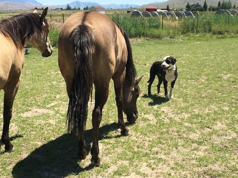 GRULLA MARE WITH POCO BUENO ON PAPERS