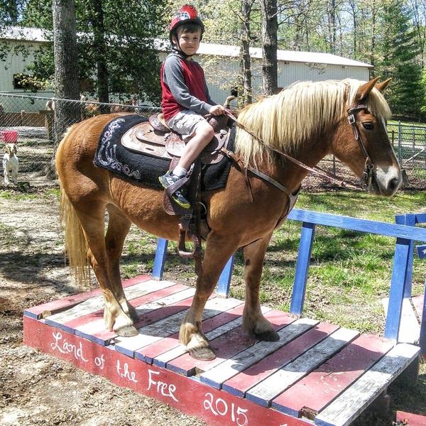 CONFIDENCE BUILDER!!!! GREAT KIDS\BEGINNER HORSE