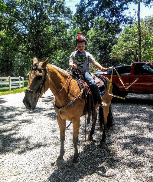THE. BEST. HORSE. PERIOD.