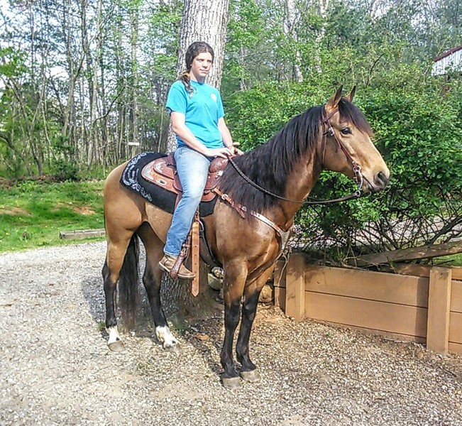 DREAM HORSE ALERT!!!!!!