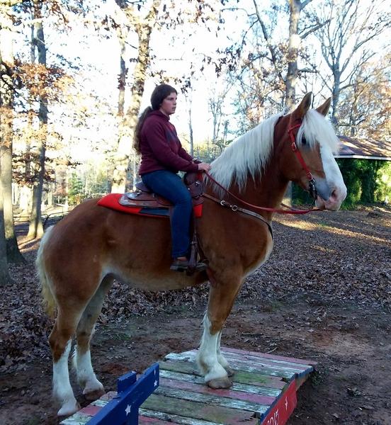 YOUR DREAM HORSE IS WAITING----BEGINNER DELUXE!!!!
