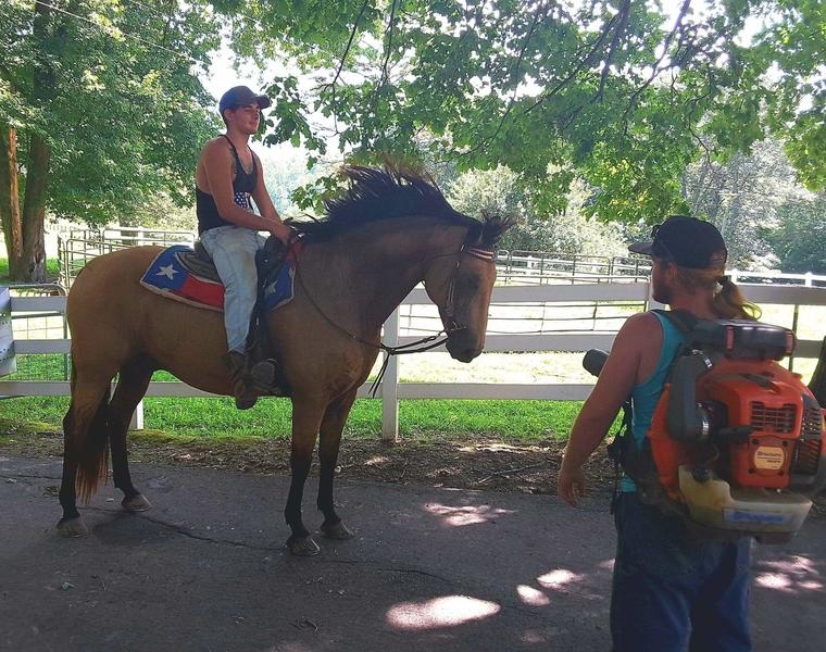 HOLD YOUR HORSES... Buckskin DREAM HORSE