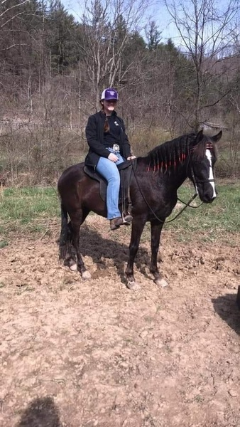 Well Trained Experienced Gorgeous Trail Horse