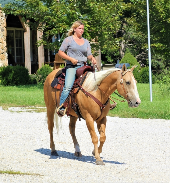 **SOLD** Gorgeous Stocky Palomino QH Gelding - Very Well Trained