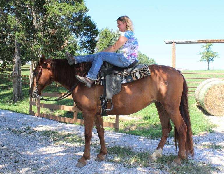 **SOLD** Nice Gentle Trail & Ranch Fox Trotter, Safe for Anyone