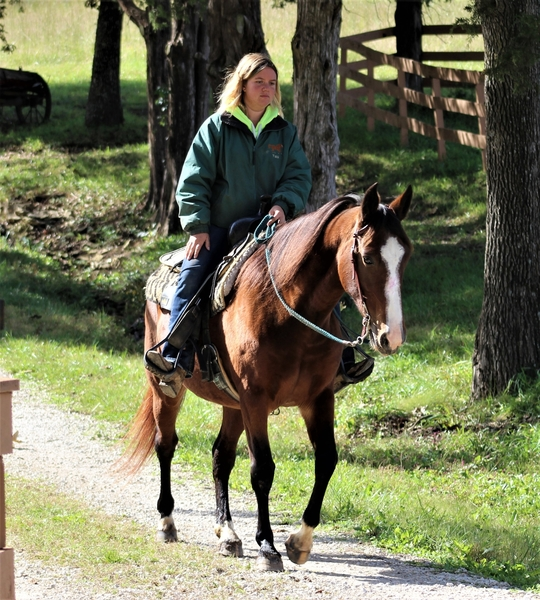**SOLD** Smooth & Very Well Mannered TWH Trail Mare