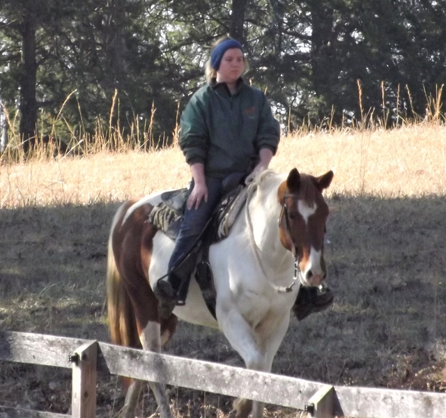 **SOLD** Extremely Gentle Beginner & Kids Horse, Honest and Dependable