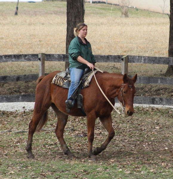 **SOLD** Beyond Quiet and Mellow, Very Gentle Trail Mare