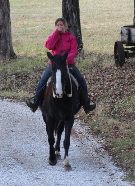 **SOLD** Smooth As Glass Gait, Super Gentle, Mild Mannered, Very Easy To Ride