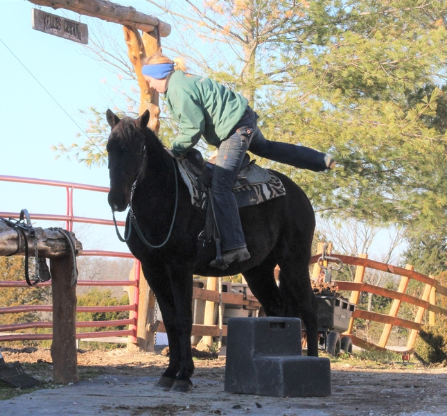 **SOLD** Smooth, Gentle & Very Personable TWH Trail Gelding