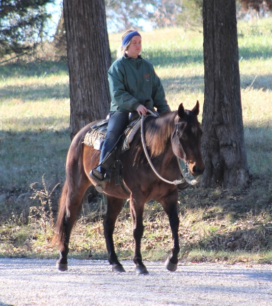 **SOLD** Pretty Bay Roan QH - Easy To Ride & Easy On The Eyes!!