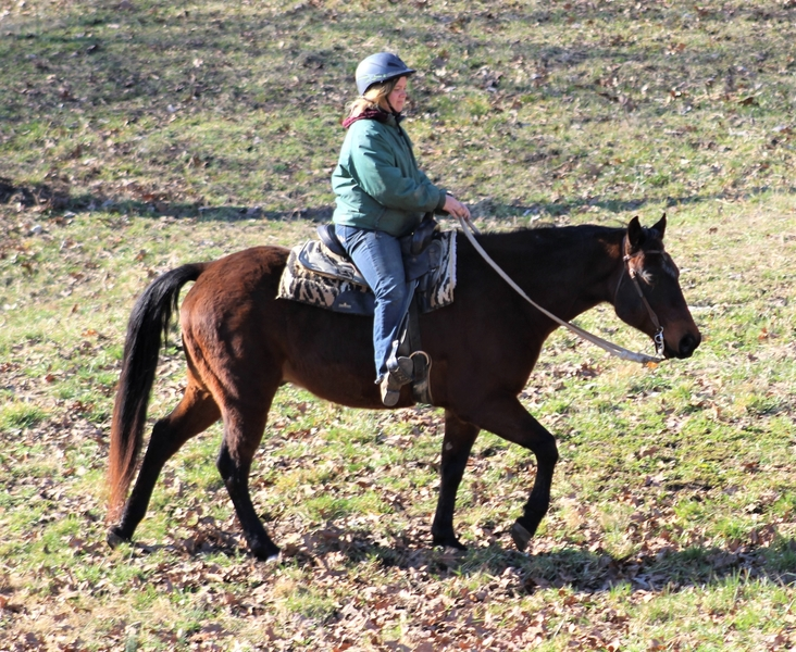 **SOLD** Extremely Quiet & Well Mannered Reg. QH Gelding