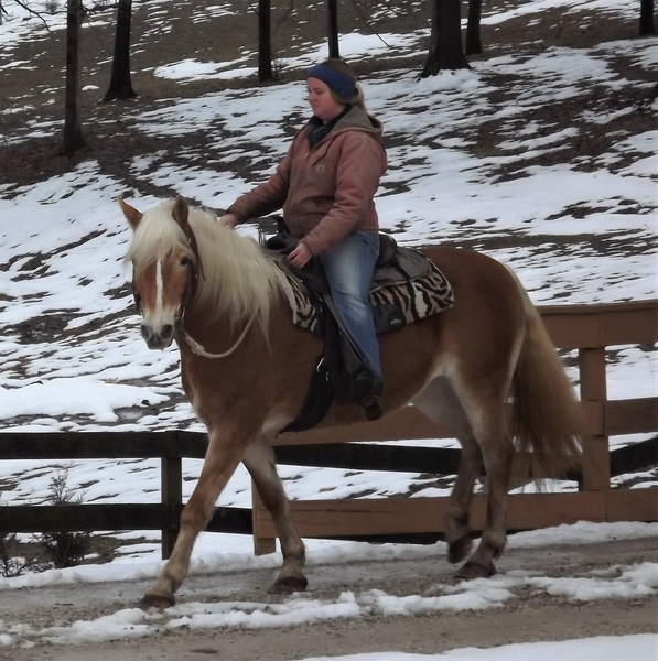 **SOLD** Absolutely Adorable Haflinger Mare - Too Cute, and So Gentle!