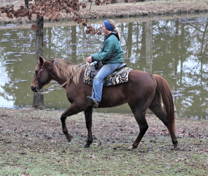 **SOLD** Gorgeous Girl, Excellent Trail Horse!