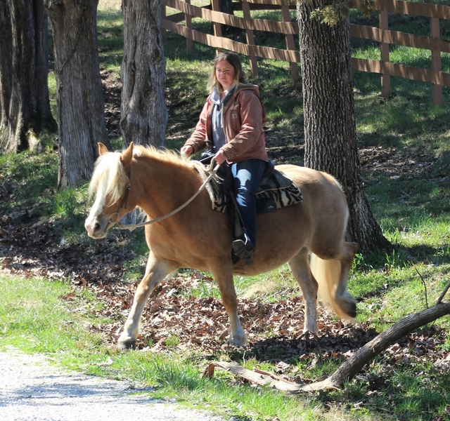 **SOLD** Super Gentle Haflinger Mare - 2 for 1