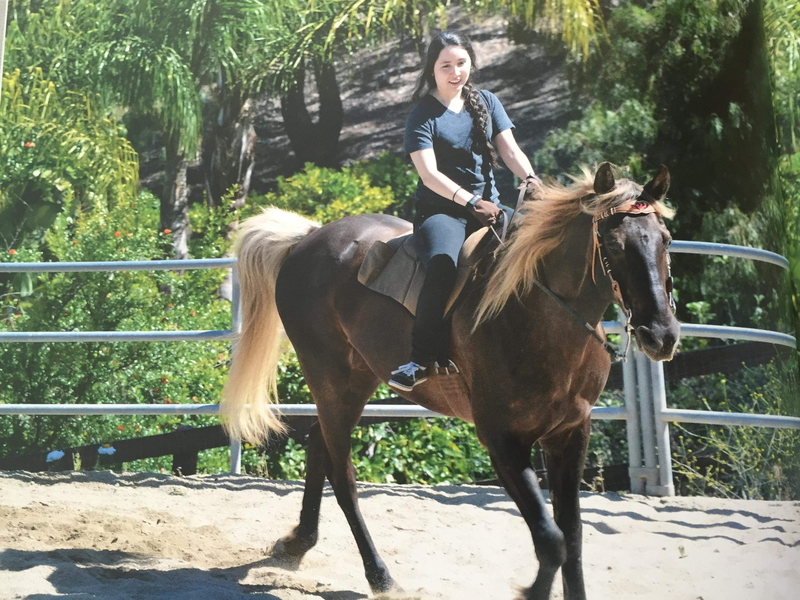 Stunning Well Trained Trail Horse