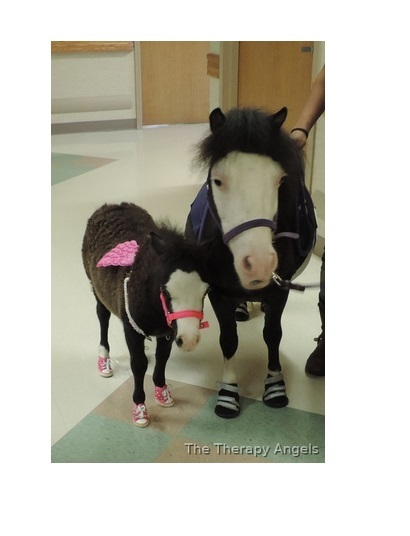 "25-29"" tall Therapy Trained Minis!! www.therapyminiatures.com"