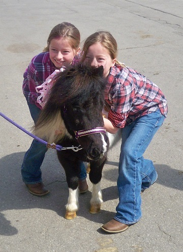 """25-29"""" tall Therapy Trained Minis!! www.therapyminiatures.com"""