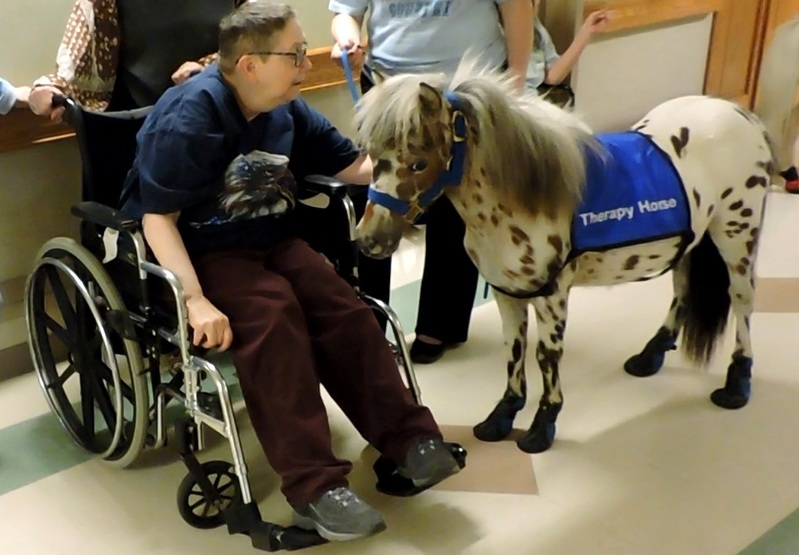 "22""-25"" Tall Therapy Mini Horses"