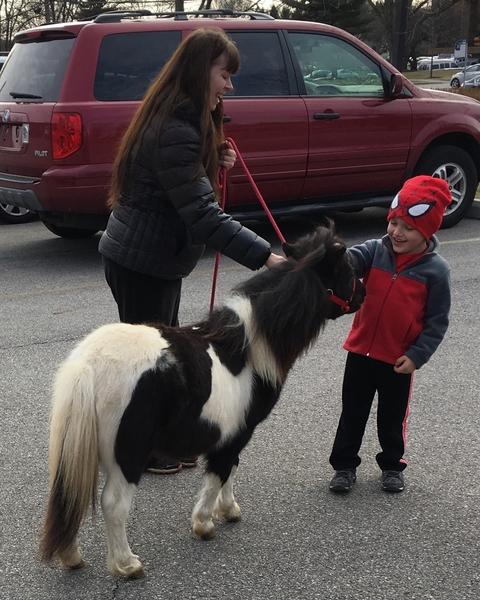 "22""-25"" Tall Therapy Mini Horses"
