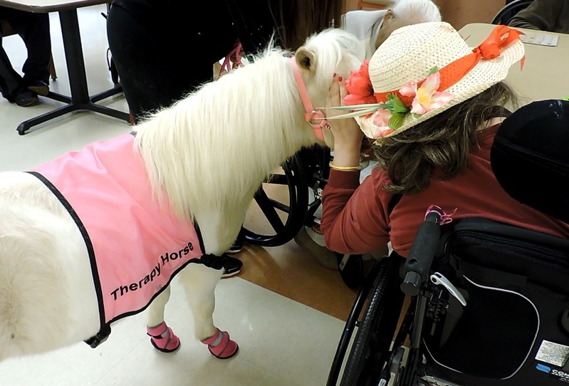 Subscribe to our Therapy Horse Newsletter