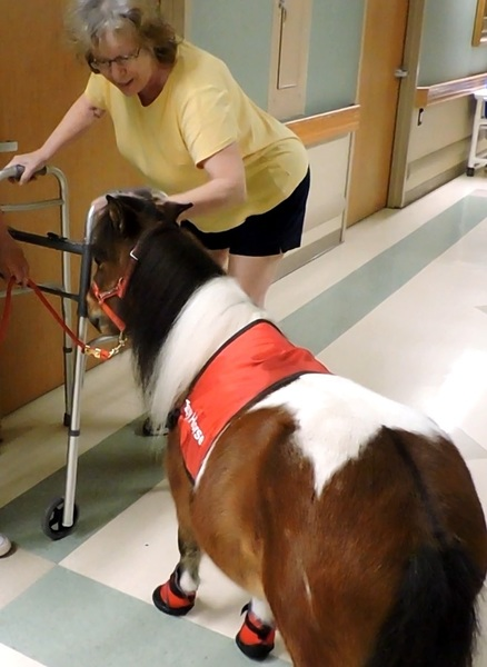 Mobility Service Horse Training