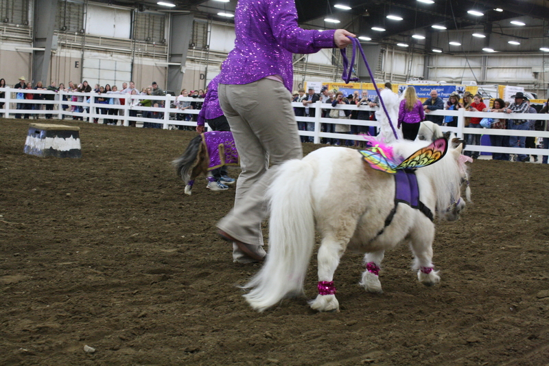 Therapy Horse & Trick Training Clinics!