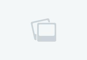 """26"""" Homozygous Pinto Miniature Stallion FOR STUD"""