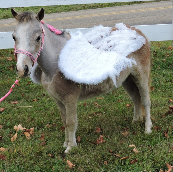 MINIATURE THERAPY ANGELS - THERAPY TRAINED MINIATURE HORSES