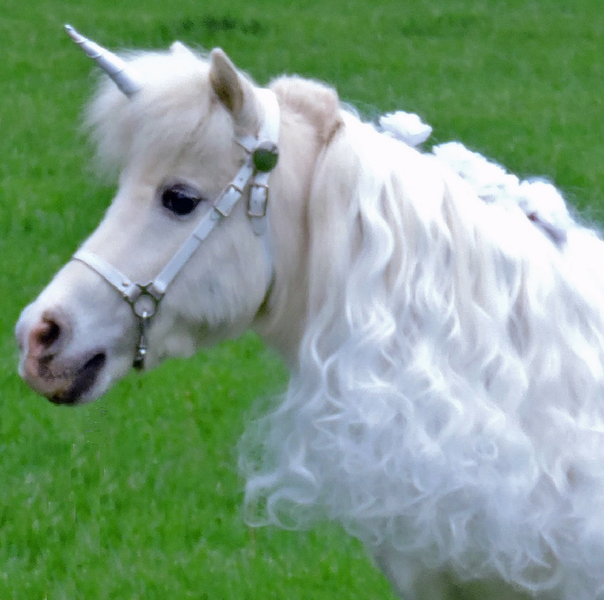 Helpful Hints To Therapy Horse Visits