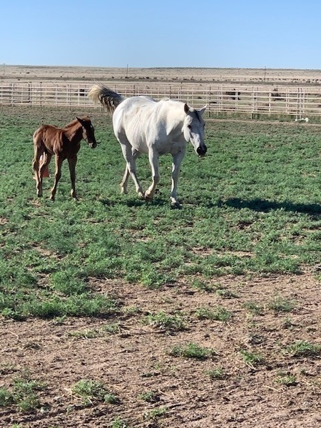 FINISHED ROPE MARE WITH FOAL