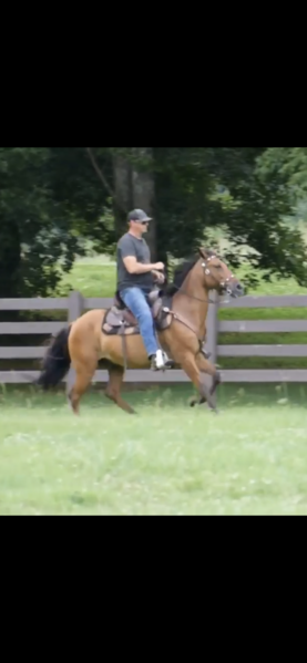 Gorgeous All Around Great Neck Reining Trail Horse
