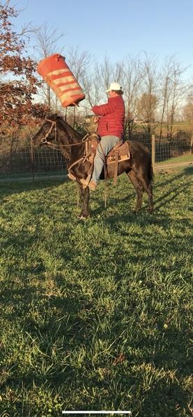 14 Hand Neck Reining Black Trail Horse