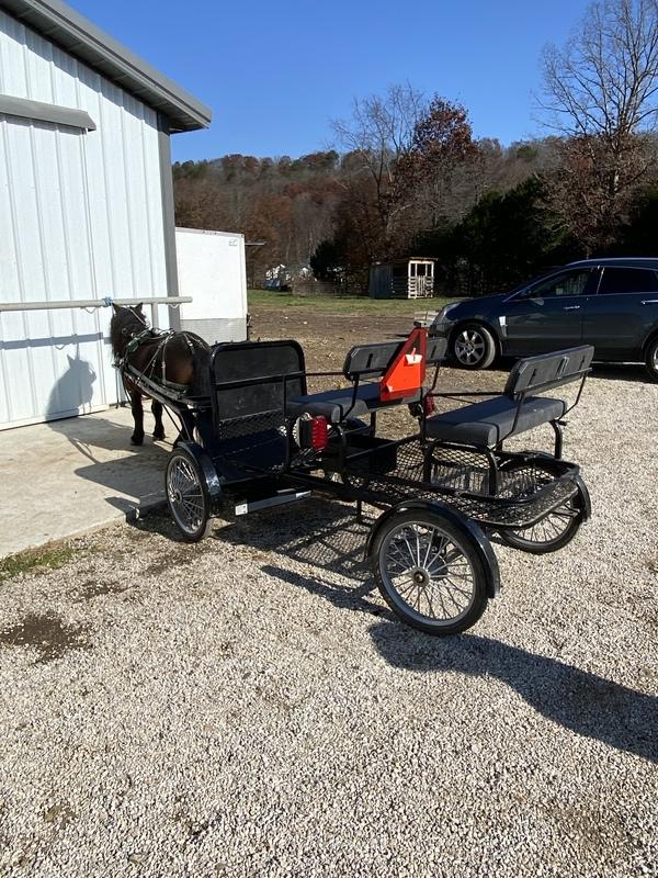 "38"" Beautiful Sweet Riding/Driving Stallion"