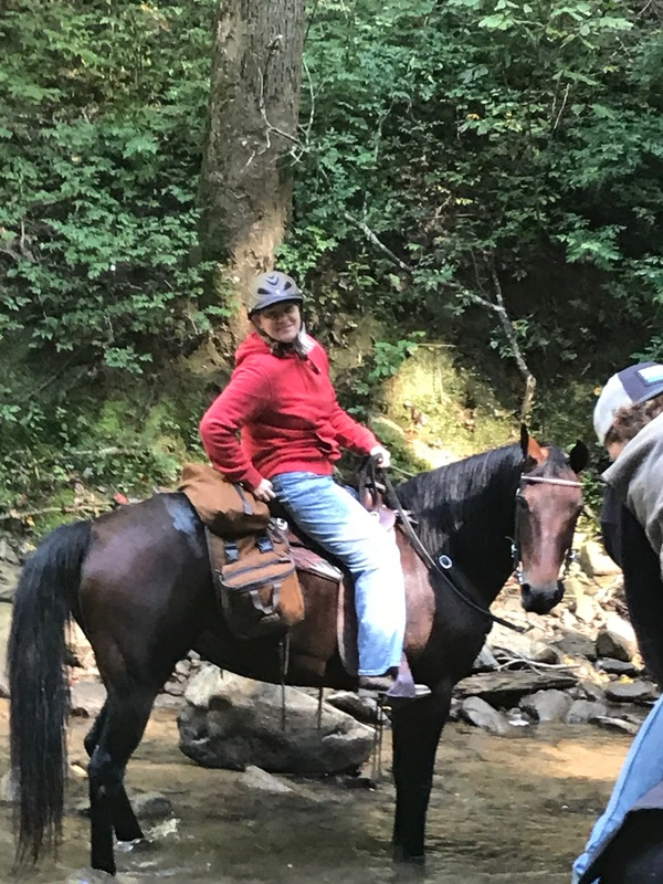 Beautiful Easy To Ride Trail Horse Deluxe!!
