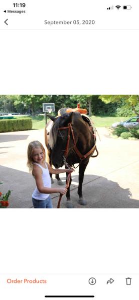 Gorgeous Versatile Novice Safe Trail Horse