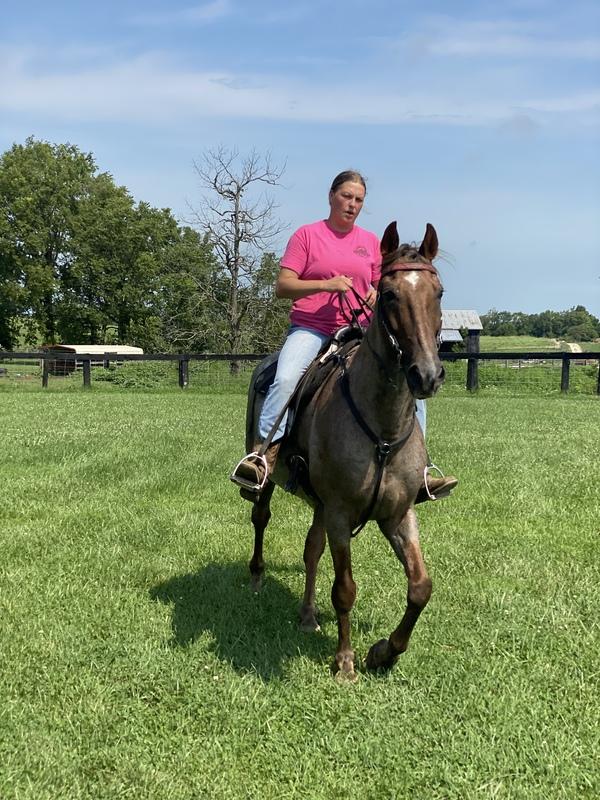 Beautiful Roan Trail Horse