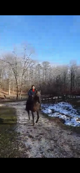 Gorgeous Experienced Chocolate Trail Horse