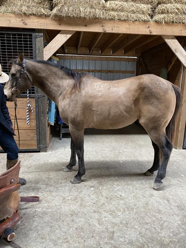 Nikki Thomas Barrel Horses - Home | Facebook