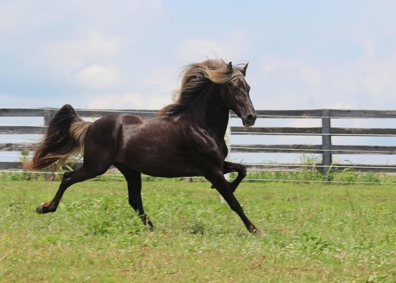 Gorgeous Well Bred Yearling Colt