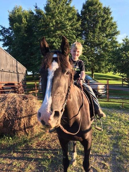 Novice Safe Family Trail Horse