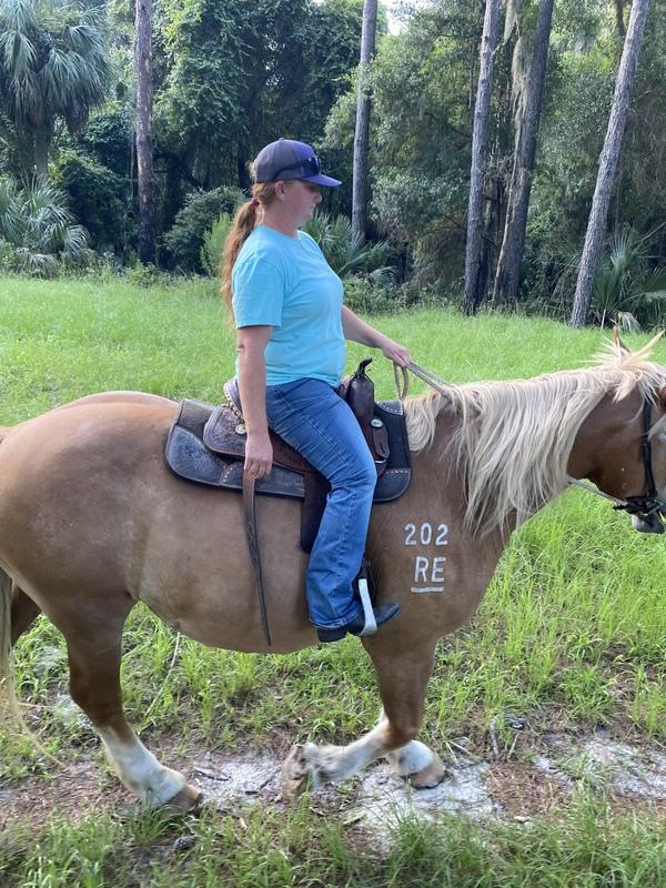 Big sweet trail horse