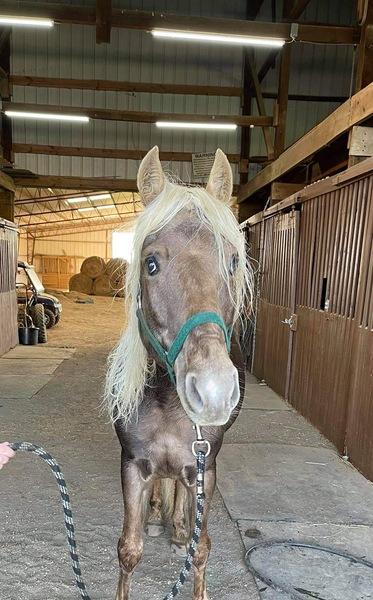 Stunning Sweet Breeding Stallion