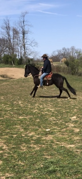 Bomb Proof Trail Riding All Around Gelding