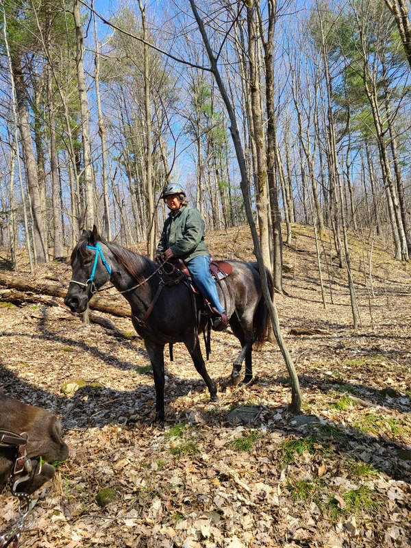 Gorgeous Experienced Blue Roan Trail Horse