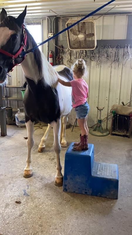 Sweet Novice Safe Family Horse