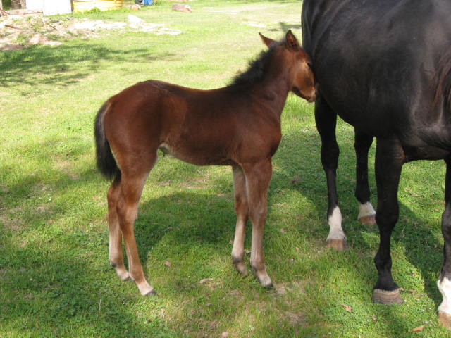 Beautiful well bred filly