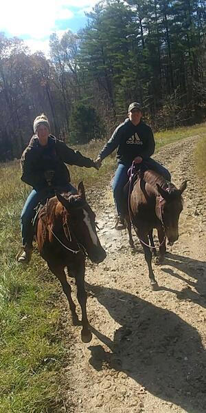 15.2 Gorgeous Trail Horse