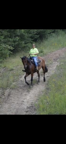 Beautiful Seasoned Trail Horse